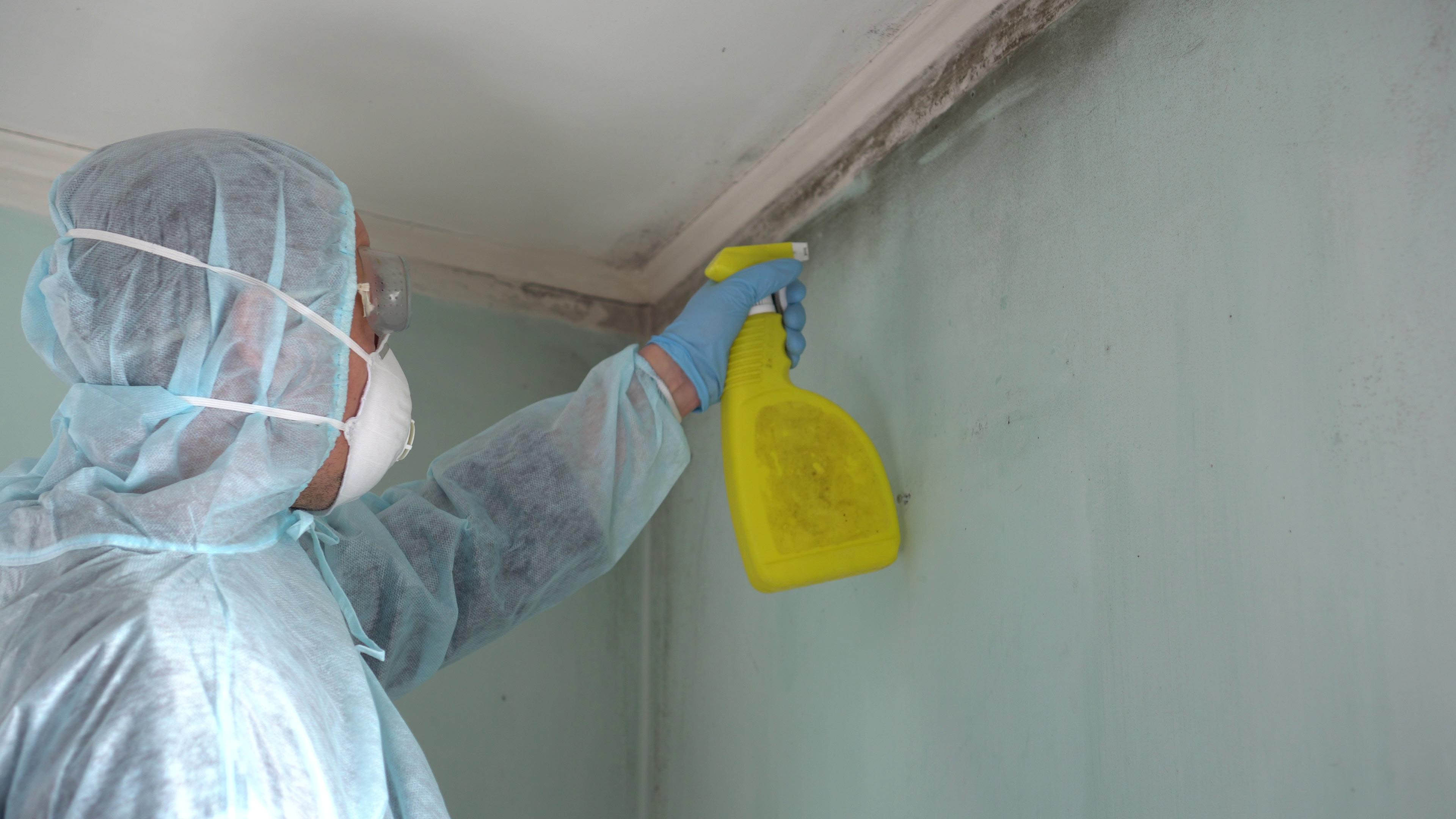 close up spraying mold